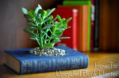 Succulent planter out of an old book