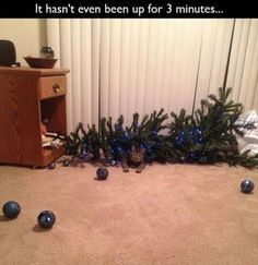 tree down in ......3....2....1
