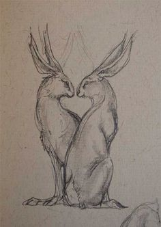 The everyday journal of artist, writer and illustrator Jackie Morris, in words and pictures. Animal Sketches, Bunny Sketches, Animal Drawings, Botanical Illustration, Illustration Art, Pokemon, Rabbit Art, Bunny Art, You Draw