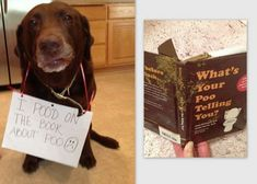 The 25 Naughtiest Dogs In The World Posing With Their Confessions.