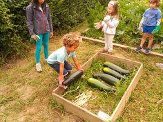 Vegetables, Summer Time, Vegetable Recipes, Veggies