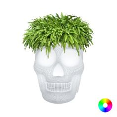 Beach Themed Home Decor Skull Outdoor Planters And Business Drinking Champagne Buckets at Smithers. Black Ivory Balsam Green Garden Planters and Champagne Bucket Cooler Head Planters, Outdoor Planters, Garden Planters, Champagne Cooler, Champagne Buckets, Geodesic Dome Kit, Vintage Robots, Best Hero, Recycled Garden