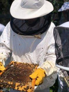 Bees are rather particular about their digs. The hive is composed internally of beeswax cells, honeycomb that contains larvae, honey and pollen. Learn more about how we harvest honey at Babylonstoren, South Africa. | Babylonstoren | Beekeeping | Beekeeping Aesthetic | Apiary | Honey Harvesting | Cape Winelands | South Africa | Bees | #babylonstoren #honeyharvesting #savethebees #beekeeping Harvesting Honey, Bee Wings, Beekeeping For Beginners, Spicy Honey, South African Recipes, Farms Living, Save The Bees, Farm Yard, Bees Knees