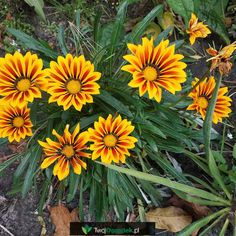 Plants, Garden, Lawn And Garden, Plant, Planets