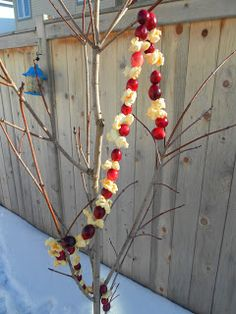 A gift for the birds, homemade popcorn and cranberry chains.
