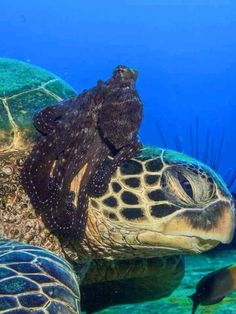 sea life - sea life photography - sea life underwater - sea life artwork - sea life watercolor sea l Underwater Sea, Underwater Creatures, Ocean Creatures, Beautiful Creatures, Animals Beautiful, Cute Animals, Turtle Love, Deep Blue Sea, Sea World