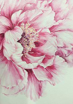 Homes to Luv — syflove: pink - Fleurs Peony Painting, Watercolor Flowers, Watercolor Paintings, Watercolours, Flower Art Images, Botanical Art, Art Drawings, Artwork, Peony Flower