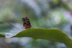 papillon by Richard Kam Macro Photography, Tourism, Wildlife, Vacation, Nature, Animals, Traveling, Amazing, Garden
