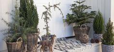 Pynt inngangspartiet med vintergrønne busker   Inspirasjon fra Mester Grønn