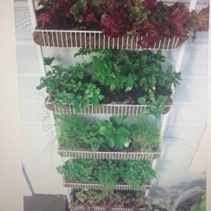 recycle unused items. Cheap gardening for small spaces