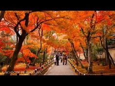 [4K]TOKYO JAPAN 東京・皇居•乾通りの紅葉 The Autumn leaves of the Imperial Palace 東京観光 日本の紅葉  ディスカバーニッポン - YouTube