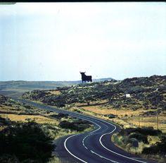 Toro de Osborne carretera