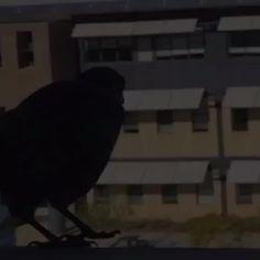 Mission Crow surveils Joondalup TAFE