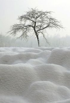 white snow nature by Timtam