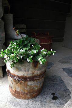 Remontin yhteydessä talon alta löytynyt vanha saavi sai uuden elämän kukkapurkkina