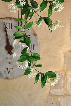 A l'ombre du jasmin en fleur   Under the JASMINE flowers