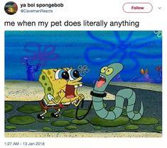 Basically when Ella and Harley not Max memes memeoftheday funny funnymemes funnyshit doggomemes dogs doggos dogmemes dogsmemes me same dog memes😂 spongebobmemes spongebob icooateverything Funny Spongebob Memes, Funny Animal Memes, Stupid Funny Memes, Funny Relatable Memes, Funny Shit, Funny Animals, Funny Stuff, Funny Things, Funny Friday Memes