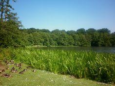 Frensham pond at Farnham, Surrey Farnham Surrey, Share Photos, Near Future, Pond, Vineyard, Travel Destinations, Places, Happy, Outdoor