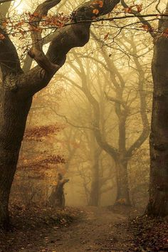Foggy forest, as from a fairy tale. Gloomy, dark, enchanting old mighty trees.Foggy forest, as …