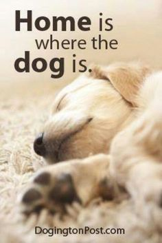 Home is where the heart is, dog quote