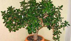 Ikebana, Bonsai, House Plants, Feng Shui, Home And Garden, Nature, Hindus, Gardens, Interiors