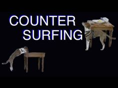 Force-free Methods to Stop Your Dog From Counter Surfing