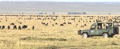 Governors Camps - Luxury Safari Camps in the Masai Mara National Reserve
