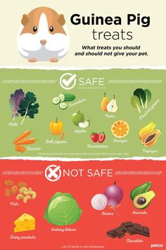 What treats are safe and unsafe for your pet guinea pig.You can find Guinea pig care and more on our website.What treats are safe and unsafe for your pet guinea pig. Guinea Pig Food List, Diy Guinea Pig Cage, Guinea Pig House, Baby Guinea Pigs, Guinea Pig Care, Pet Pigs, Baby Pigs, Caring For Guinea Pigs, Diy Guinea Pig Toys