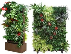 Living wall dividers for a room