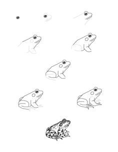 Frog (Bullfrog) Drawing Lesson, draw a bullfrog Doodle Drawings, Cartoon Drawings, Animal Drawings, Easy Drawings, Drawing Sketches, Horse Drawings, Sketching, Frog Drawing, Basic Drawing