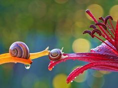 Talented Ukrainian nature photographer Vyacheslav Mishchenko has an eye for taking photos that bring small natural worlds up to our level. *snails*