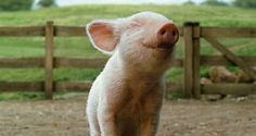 this pig makes me smile!