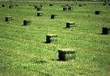 our hay alfalfa 40 to 45 pound