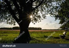 Find Big Tree Sun Setting Behind Summer stock images in HD and millions of other royalty-free stock photos, illustrations and vectors in the Shutterstock collection. Thousands of new, high-quality pictures added every day. Summer Sky, Big Tree, Fields, Photo Editing, Bench, Stock Photos, Sunset, Garden, Nature