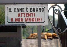 Attenti al cane buono