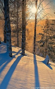 Blue shadows of winter