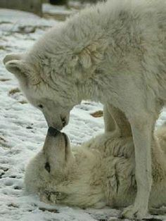 Kissing in the snow...