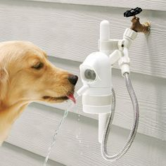 The Dog Activated Outdoor Fountain.