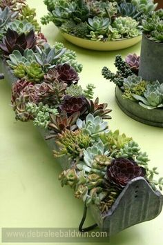 Succulents in antique chicken feeders