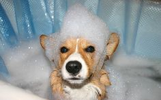 5 All Natural DIY Grooming How-Tos For Your Pup