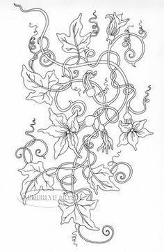 pumpkin vine drawing coloring pages on pinterest coloring pages dover