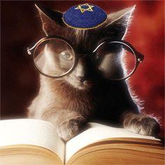 cat with yarmulke