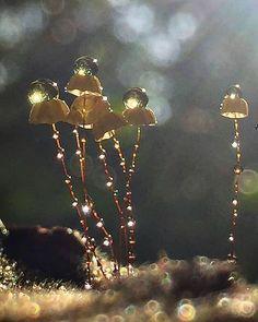 Ideas For Nature Plants Photography Dew Drops Mushroom Art, Mushroom Fungi, Wild Mushrooms, Stuffed Mushrooms, Photo Macro, Mushroom Pictures, Plant Fungus, Fotografia Macro, Nature Instagram