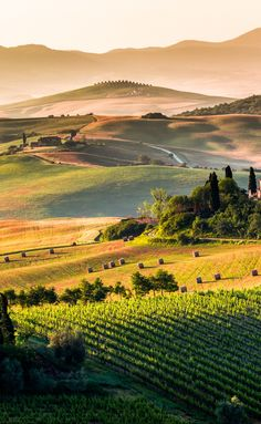 The vineyard and rolling hills of Tuscany Nature Aesthetic, Travel Aesthetic, Beautiful Places To Travel, Beautiful World, Romantic Travel, Landscape Photos, Landscape Paintings, Tuscany Landscape, Tuscany Italy