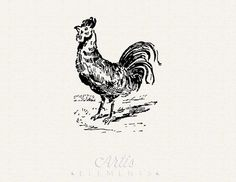 Rooster Chicken Graphic-  Vintage ClipArt Digital Download PDF, PNG