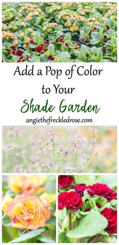 There is always that one spot in my yard that is lacking a pop of color. The shade garden. It seems to be missing vibrance and variety. When I go shopping, I tend to find many perennials that favor sun. I decided to make a big push to change it up this ye Shade Garden, Garden Plants, Plants Indoor, Gardening For Beginners, Gardening Tips, Hummingbird Flowers, Shade Plants, Garden Projects, Garden Ideas