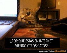 Gatos en Internet. Ese momento en el que tu gato te pilla infraganti.