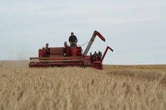 Image result for old massey combines
