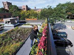Carrot Common Green Roof garden, Toronto
