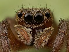 Small brown jumper (stacked)